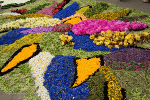 Flower carpets in Spycimierz