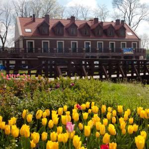 Tulipany przed budynkiem