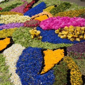 Flower carpet at Spycimierz