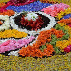 Rozeta ułożona na ziemi z żywych kwiatów