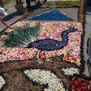 Dywan z żywych kwiatów ułożony na ziemi