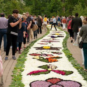 Tłum ludzi ogląda dywan ułożony z kwiatów na ulicy