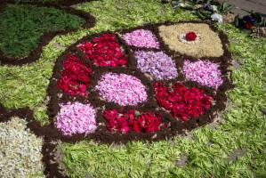 Flower carpets in Spycimierz