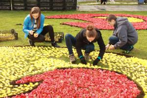 Blumenteppiche in Spycimierz
