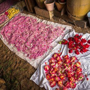 Płatki różnokolorowych kwiatów leżą porozkładane na białym płótnie