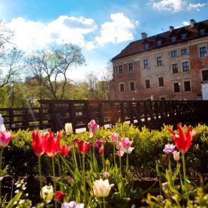 Kwitnące tulipany, w tle drewniany most i budowla z cegły