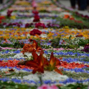 Dywan ułożony na ziemi z żywych kwiatów