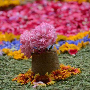 Obraz ułożony na ziemi z żywych kwiatów