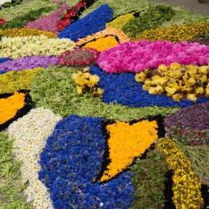 Wzór ułożony z kwiatów na ziemi